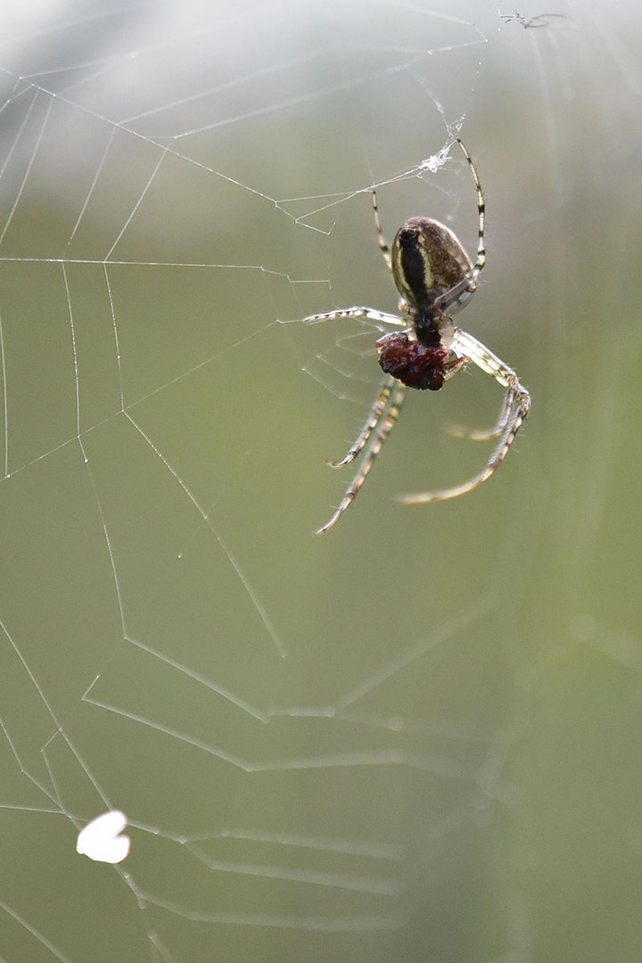 Im Spinnennetz 1