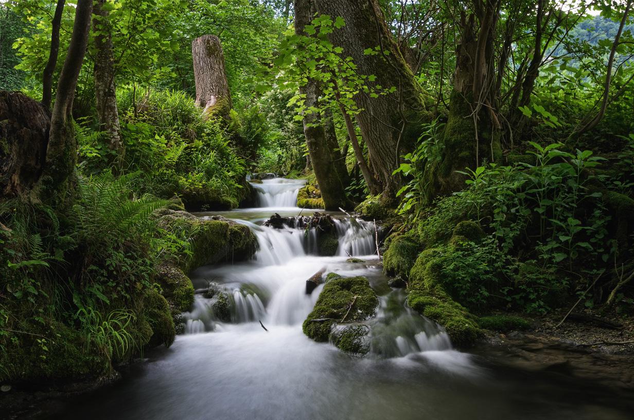 Im stillen ruhigen Wald