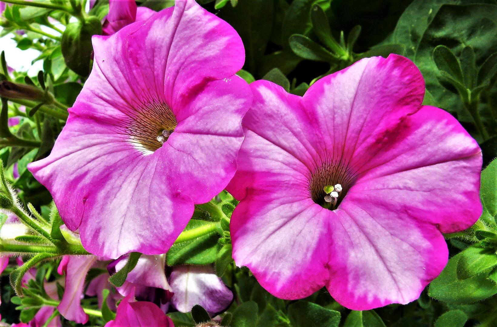 Im strahlendem violett