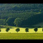 Im Streiflicht: Frühsommer- Komposition mit Baumreihe... - RELOAD (für Lady Sunshine)