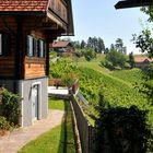 Im südsteirischen Weinland
