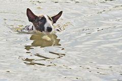 I´m swiming in the river
