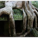Im Ta Prohm - Siem Reap, Kambodscha