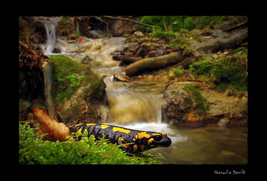Im Tal der Salamander