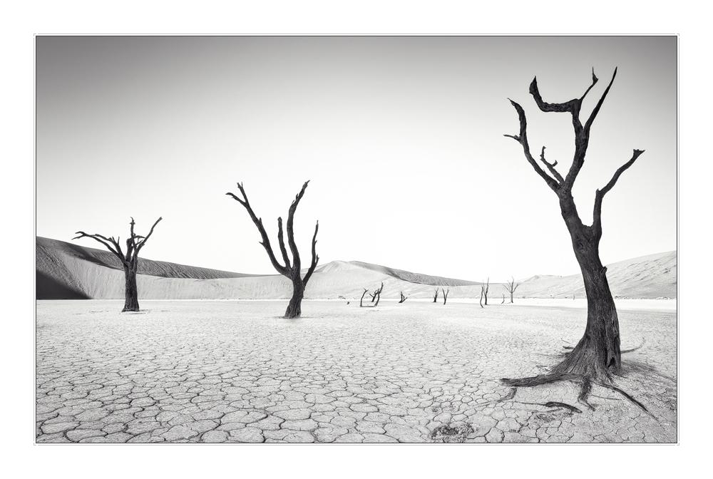 Im Tal der toten Bäume