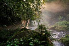 Im Tal der wilden Trieb (1)