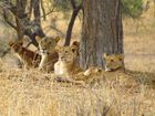 Im Tarangire National Park in Tansania