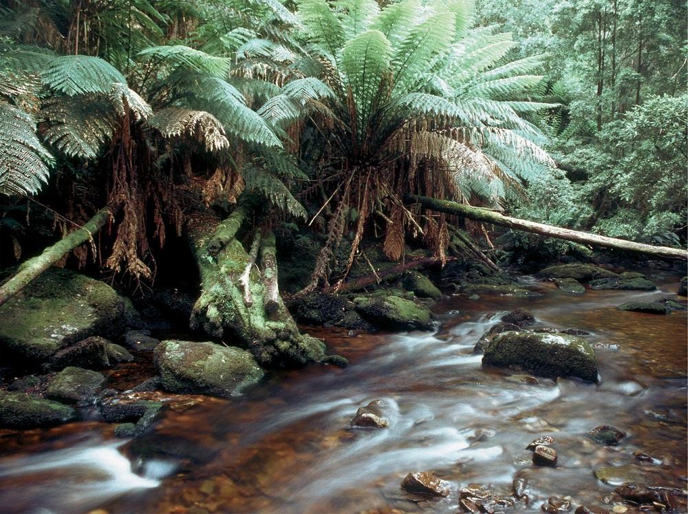 Im tasmanischen Regenwald 2