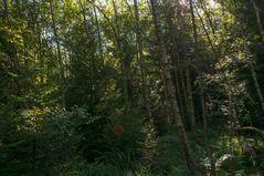 Im Teufelsmühlenwald