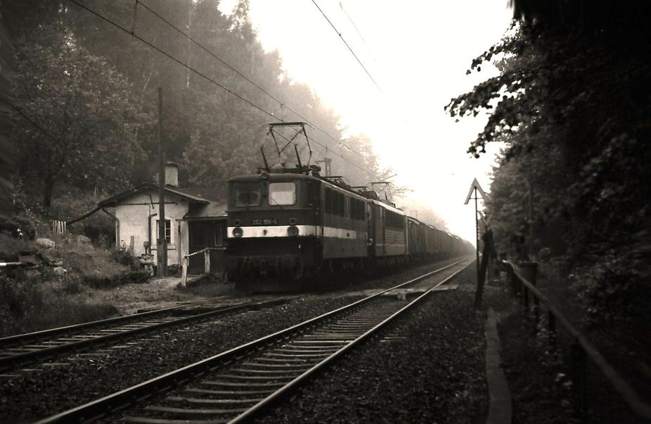 Im Tharandter Wald .