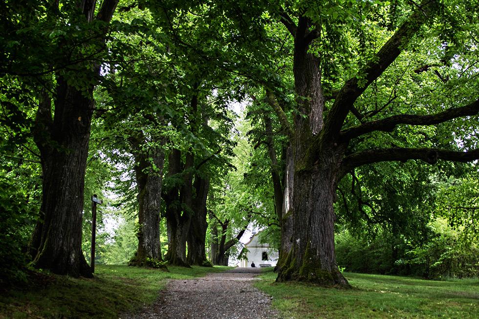 Im tiefen Bayrischen Wald