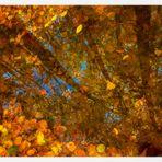 Im tiefen Herbstwald