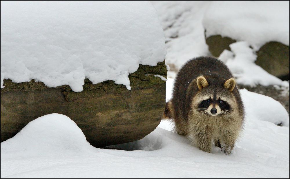 Im tiefen Schnee [3] ...