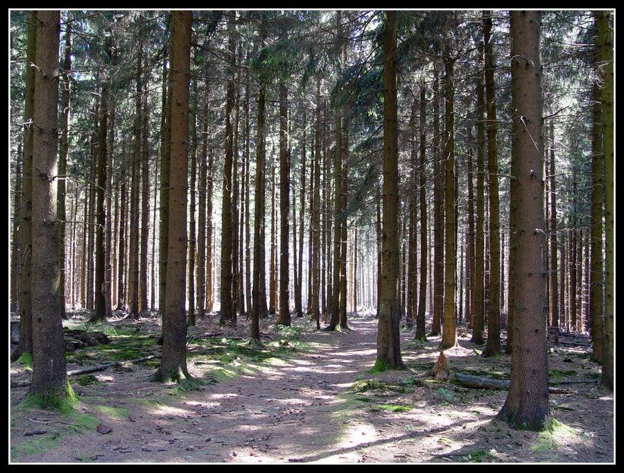 ..im tiefen Wald
