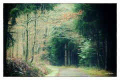 Im tiefen Winter.Wald ...