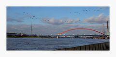 Im Tiefflug über den Rhein