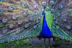 im Tierpark des Kaisergartens