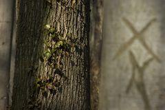 Im Tüllinger Wald 1