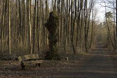 Im Tüllinger Wald