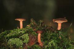 Im Unterholz entdeckt...
