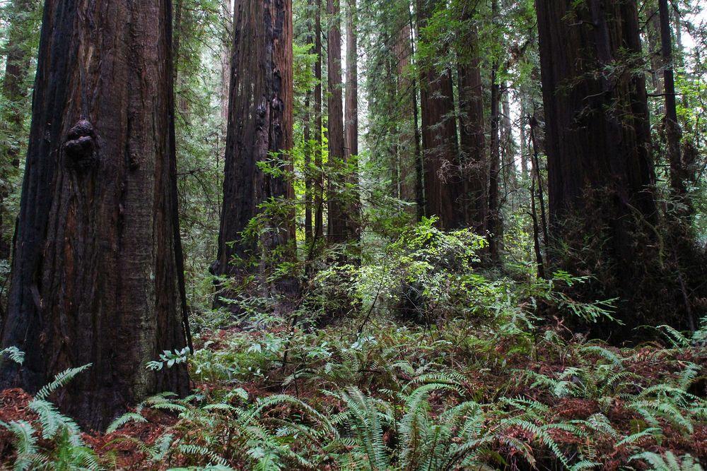 Im Urwald der Giganten