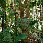 Im Urwald der Palmen