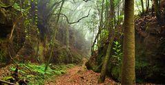 Im Urwald von La Palma