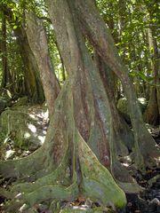 Im Urwald von Nuku Hiva