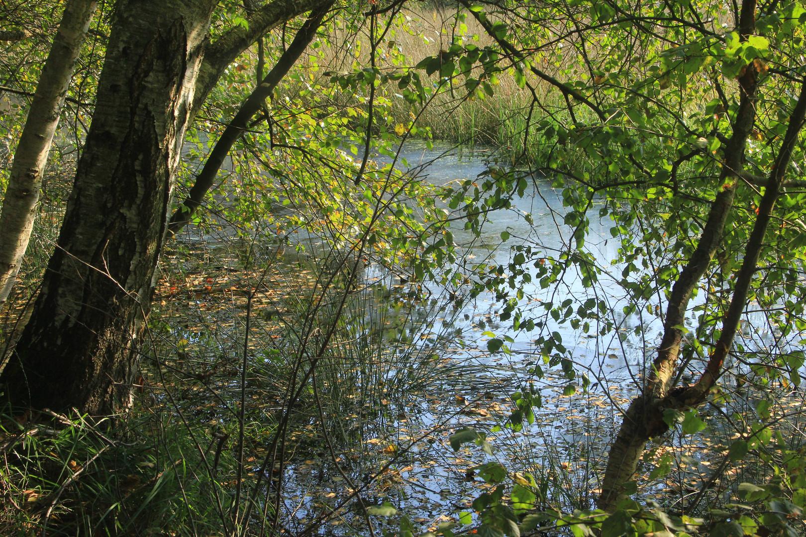 Im Venner Moor bei Senden/Westf.