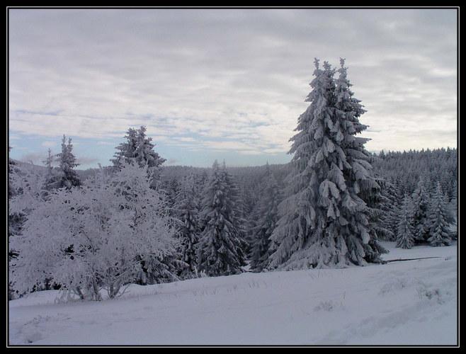 Im verschneiten Harz