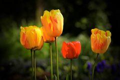 Im Visier: der Frühling