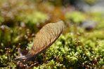 Im Visier: *Herbst in allen Schattierungen*