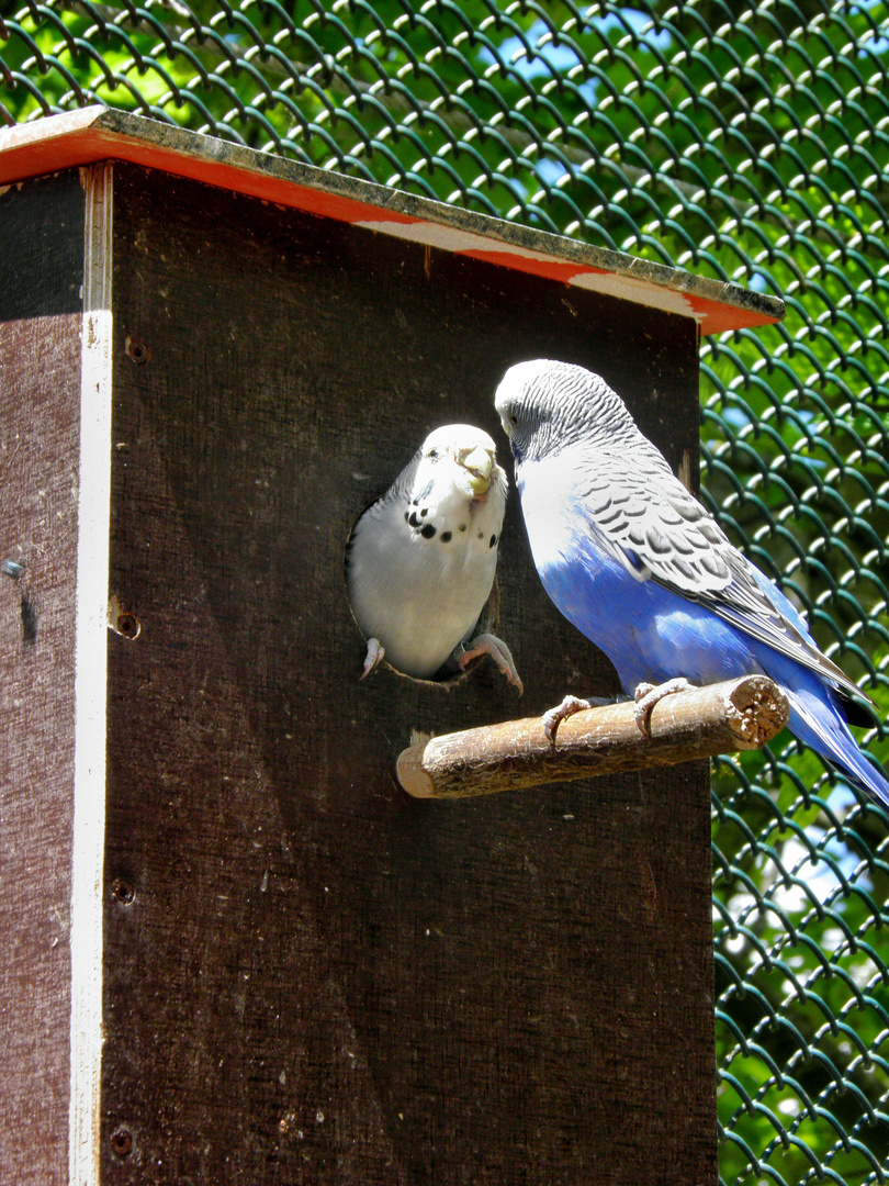 Im Vogelpark Marlow