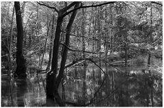 Im Wald #1