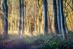 Im Wald #1 (Schwedeneck)