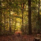 #.......Im Wald...... #