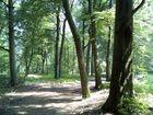 Im Wald :)