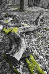 Im Wald # 9098
