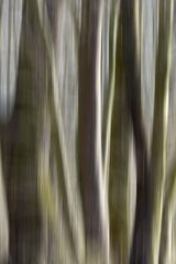 Im Wald # 9150