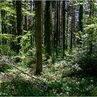 Im Wald ...