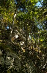 Im Wald abwärts...