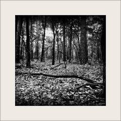 Im Wald allein