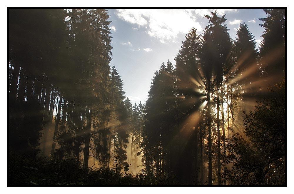 Im Wald am Morgen.....