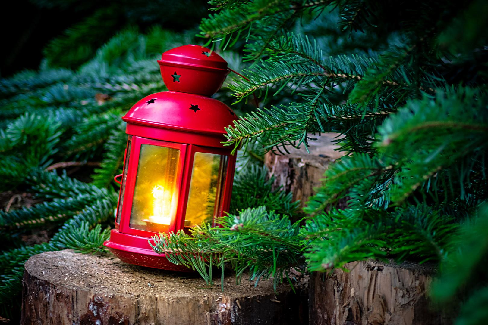 Hannover Weihnachtsmarkt.Im Wald Auf Dem Weihnachtsmarkt Hannover Foto Bild