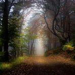 Im Wald auf der Kalmit