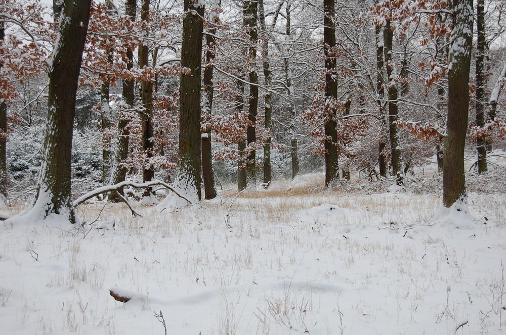 Im Wald ..