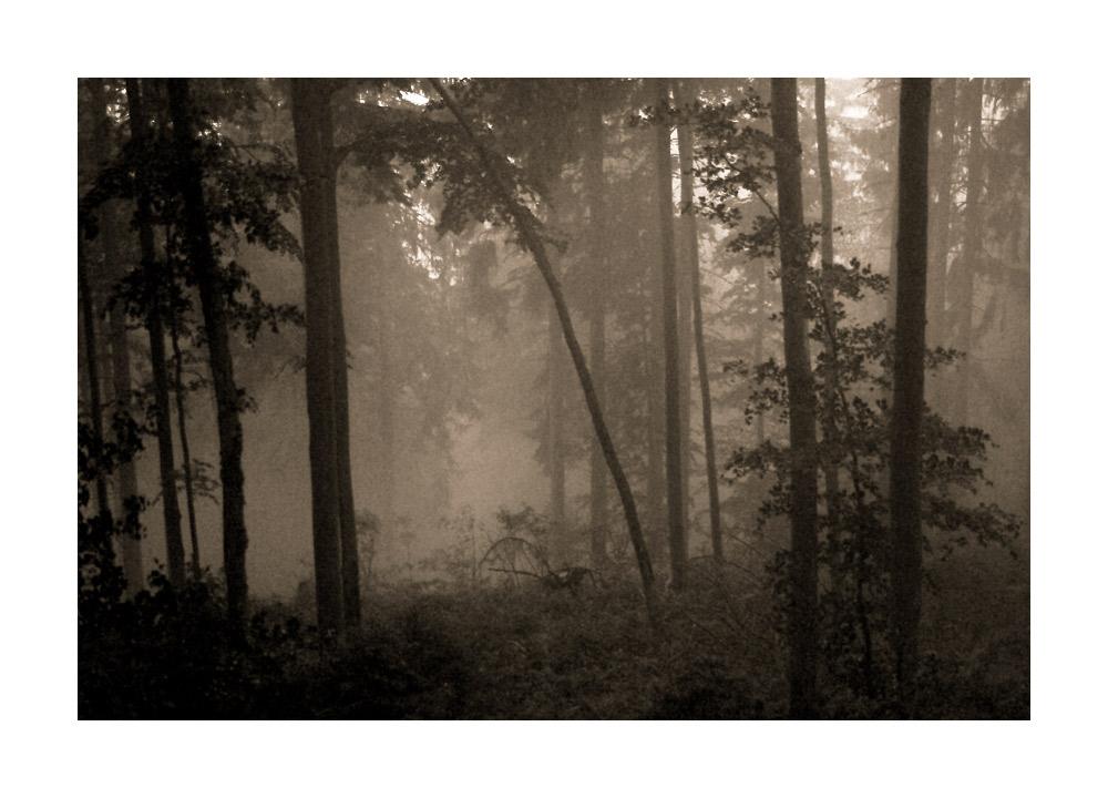im Wald, da sind