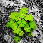 Im Wald da wächst der Klee..