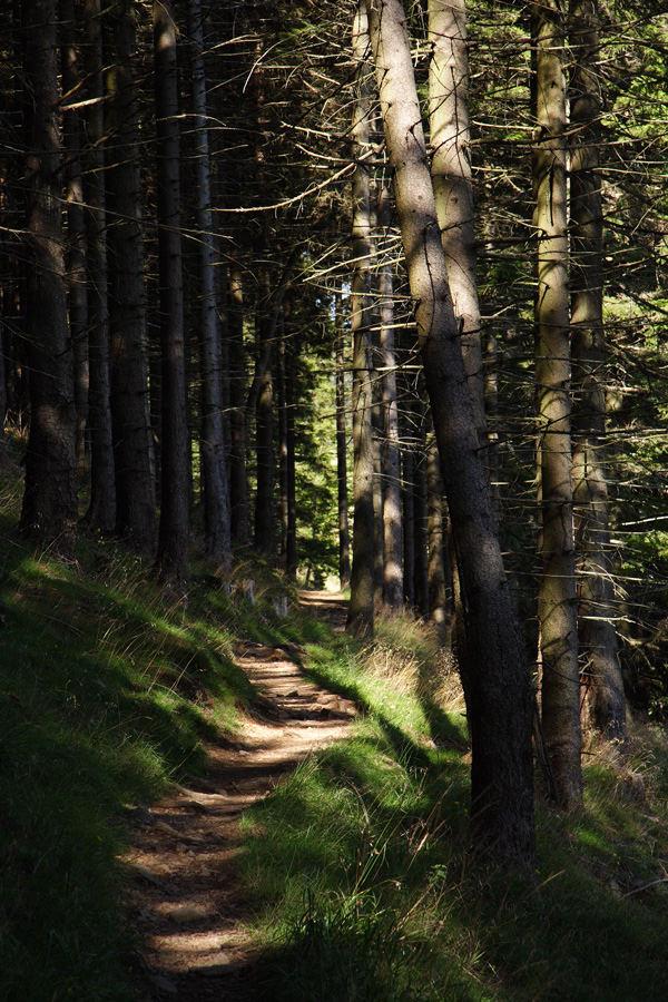 """Im Wald der *Eckertal-Elfen* und """"Harz-Kröten"""""""