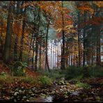 ......Im Wald  der Externsteine